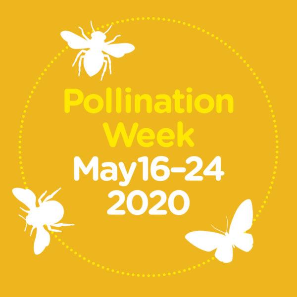 pollination week 2020