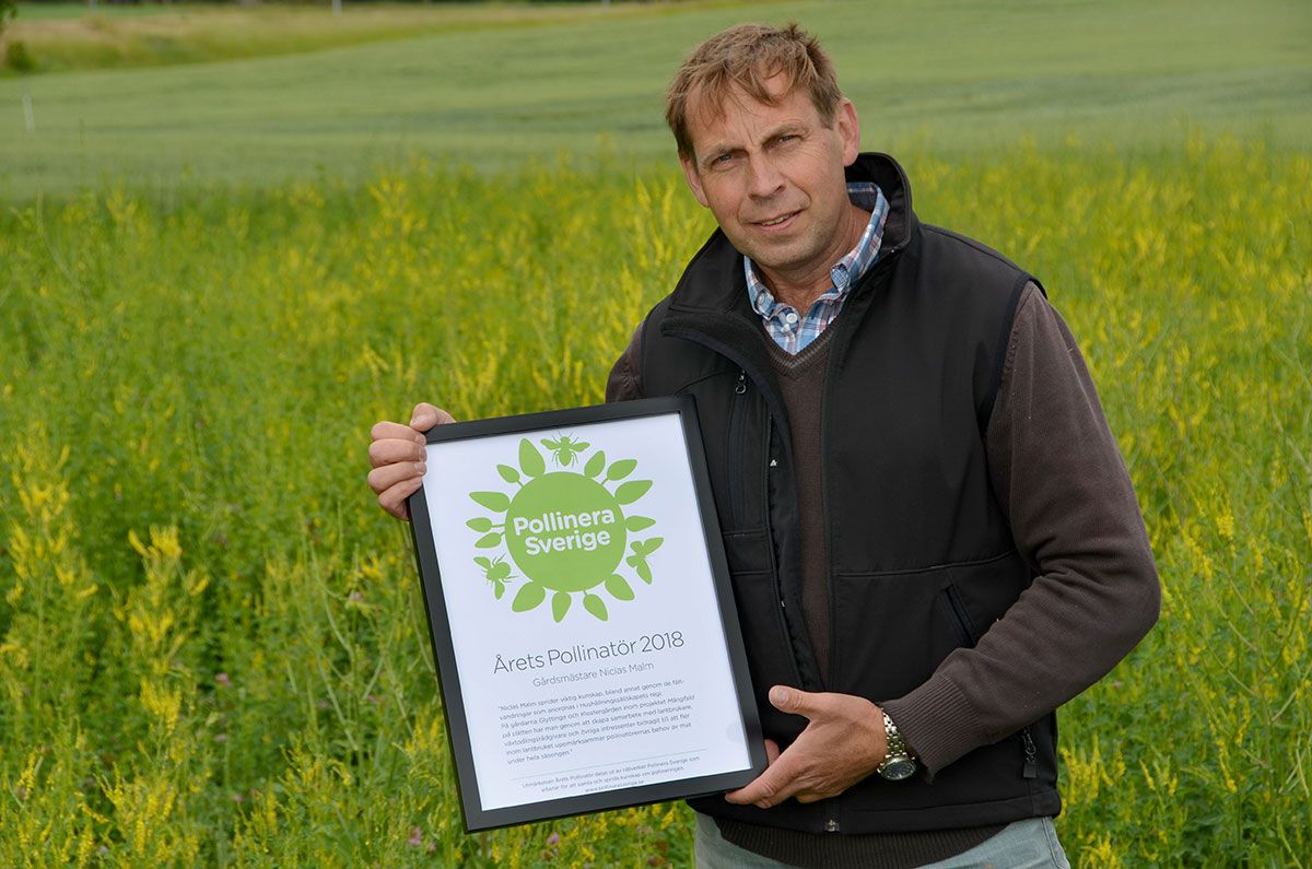 Niclas Malm Pollinator of the Year